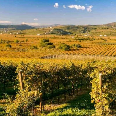 WHAT TO SEE IN VALPOLICELLA